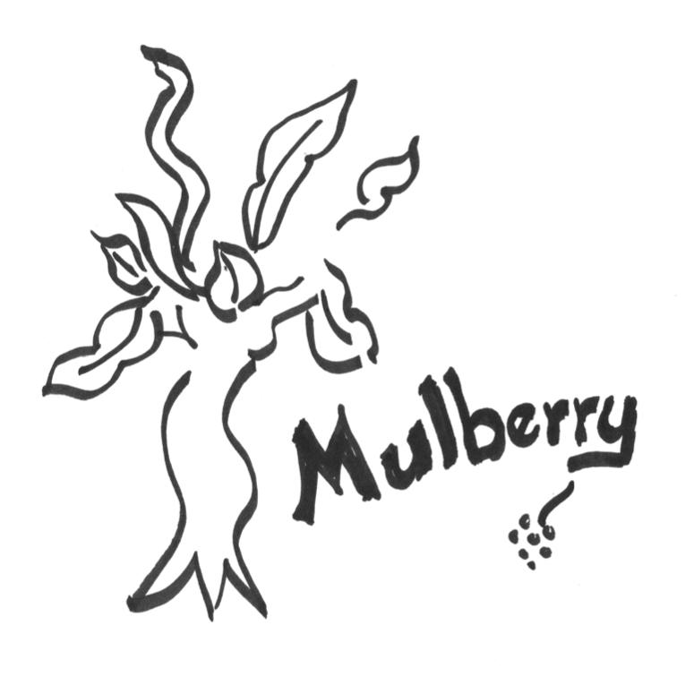 mulberrysantamonica.com